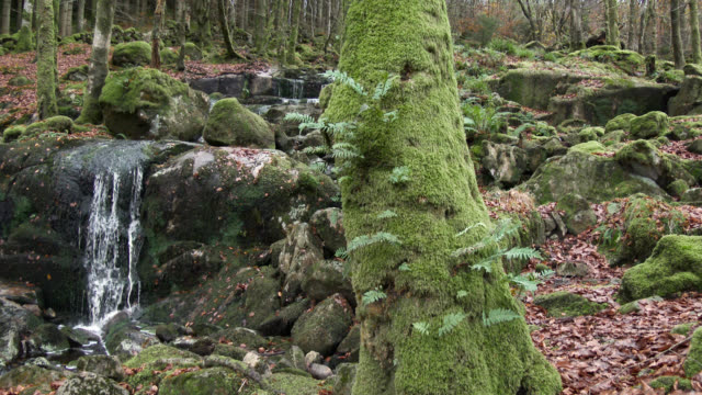 scottish woodland and small waterfall in late autumn - johnfscott stock videos and b-roll footage