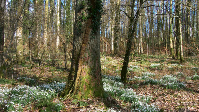 Scottish woodland in early March