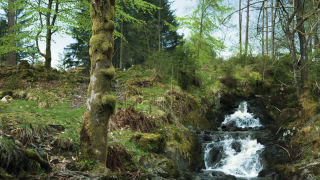 scottish woodland with a small waterfall - rapid stock videos & royalty-free footage