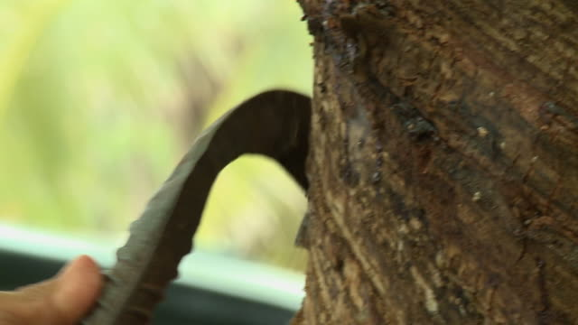 scraping bark off tree - scraping stock videos and b-roll footage