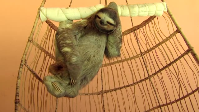 scratching sloth - hammock stock videos & royalty-free footage