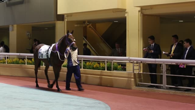 a screen displays jockeys on horses and betting odds at the hong kong jockey club's happy valley racecourse in hong kong china on thursday oct 22... - saddle stock videos and b-roll footage