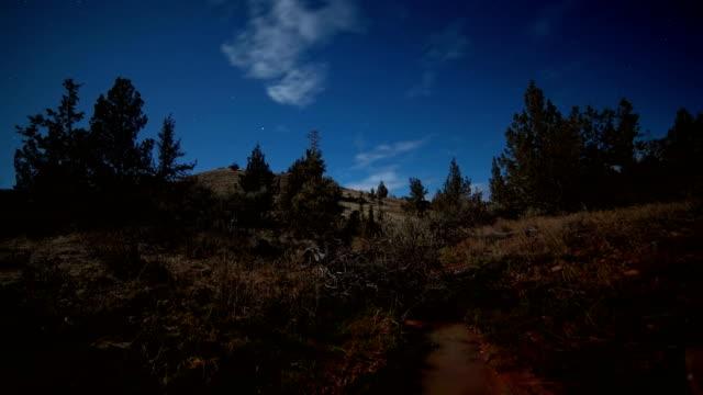 Scrub hillside western juniper sagebrush under moonlight shadows move silhouette 2
