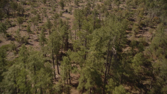 scrubby trees and shrubs grow along a dry plain. - shrubland stock videos & royalty-free footage