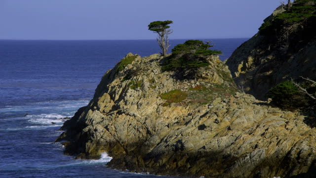 Scrubby trees grow on the rocky coastline at Big Sur, California.