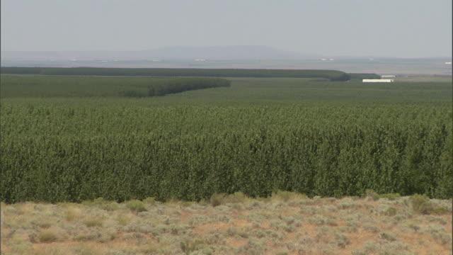 a scrubland borders a tree farm. - shrubland stock videos & royalty-free footage