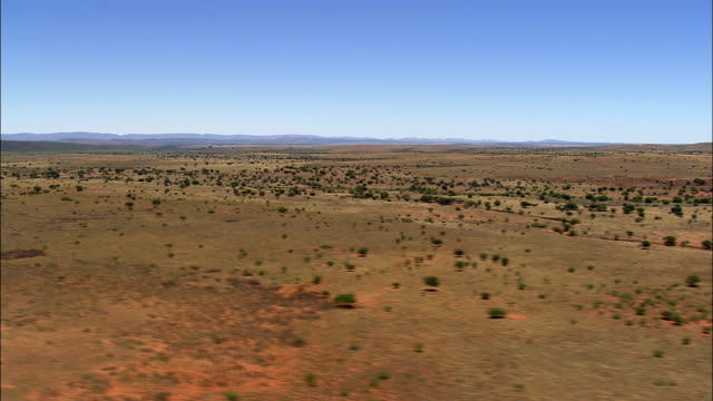 scrubland in south africa - arid climate stock videos and b-roll footage