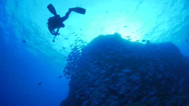 Scuba diver and school of trevally jack fish