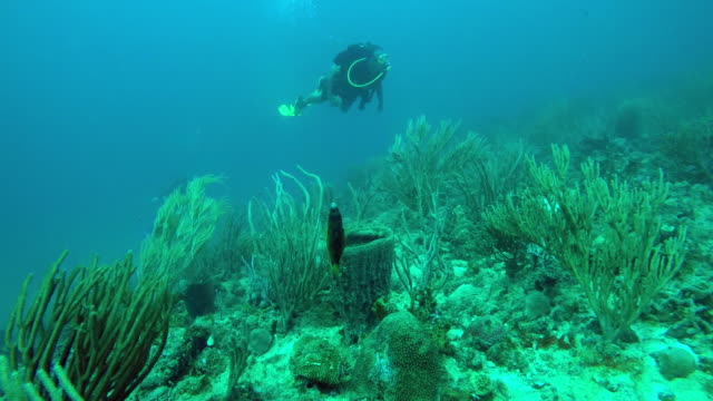 scuba diver and sealife / grenada, carribbean - caribbean sea stock videos & royalty-free footage