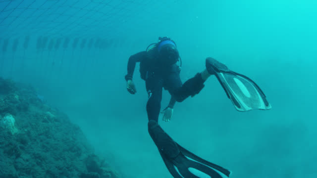 scuba diver approaches shark net, close-up on flippers - diving flipper stock videos & royalty-free footage