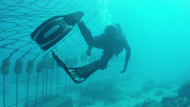 scuba diver approaches shark net, close-up on flippers - flosse stock-videos und b-roll-filmmaterial