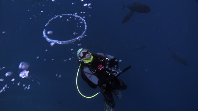scuba diver blows bubble rings underwater, fiji - aqualung diving equipment stock videos & royalty-free footage