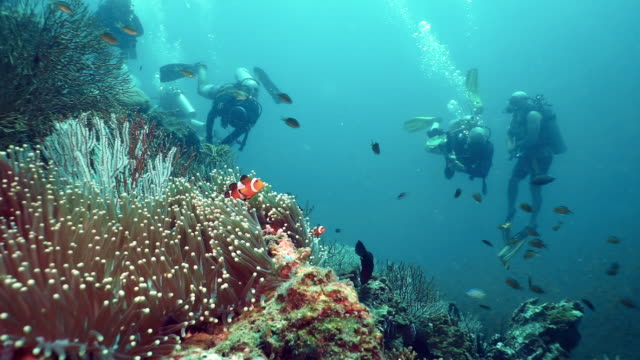 scuba diver environmentalists removing fishing net pollution from underwater coral reef - teamwork stock videos & royalty-free footage