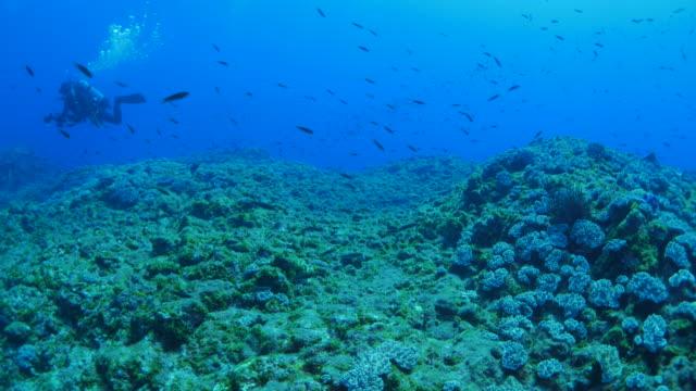 Taucher im Unterwasser-Riff