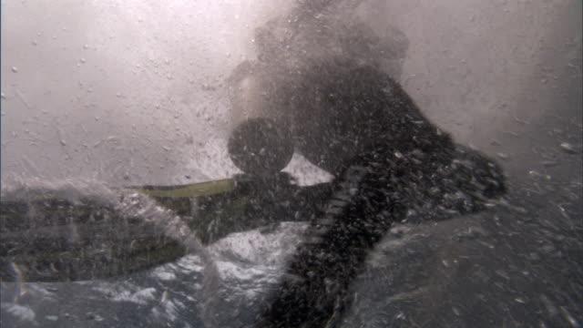 Scuba diver jumps into Pacific ocean, Fiji