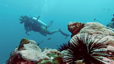 scuba diver on underwater coral reef with banded sea urchin (echinothrix calamaris) - ウニ点の映像素材/bロール