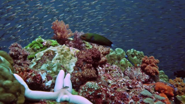 scuba diver point of view of school of fish on vibrant coral reef, hin daeng, thailand - scuba diver point of view stock videos & royalty-free footage