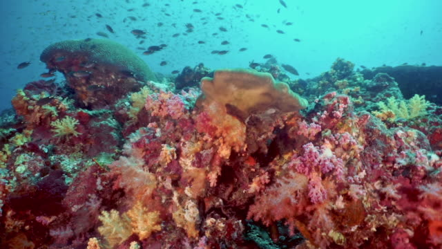 scuba diver point of view of vibrant coral reef - reef stock videos & royalty-free footage