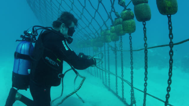 scuba diver repairs shark net, medium shot - netting stock videos & royalty-free footage