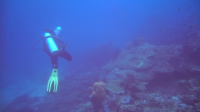 scuba diver swimming amongst a reef - aqualung diving equipment stock videos & royalty-free footage