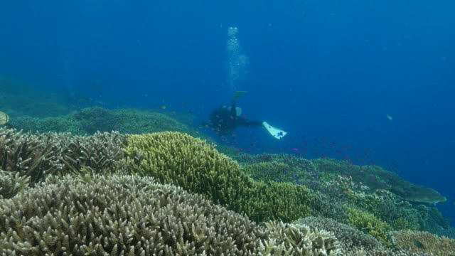 scuba diver swimming in coral reef, sipadan, malaysia - sabah state stock videos and b-roll footage