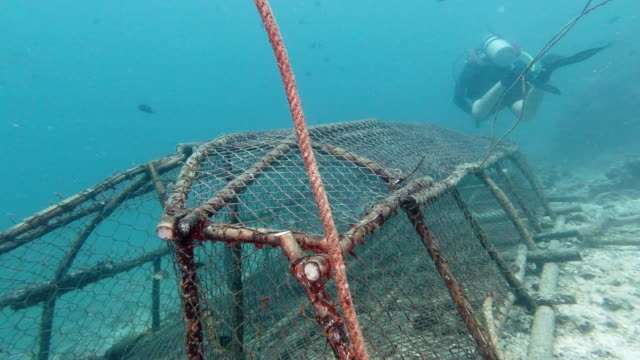 scuba diver swimming over underwater ghost net pollution - ross sea stock videos & royalty-free footage