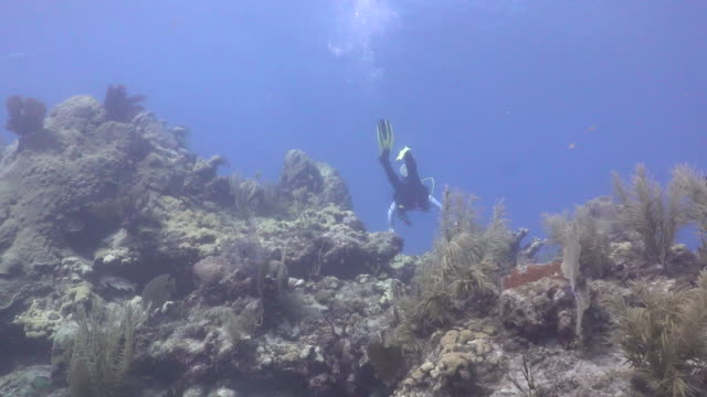 scuba diver swimming through coral at looe key coral reef in the florida keys national marine sanctuary. - ゴーゴニアンコーラル点の映像素材/bロール
