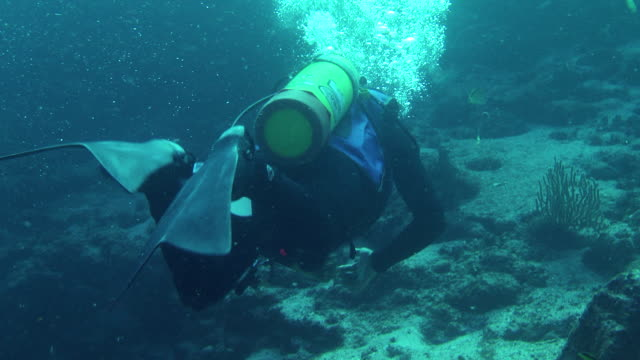 stockvideo's en b-roll-footage met a scuba diver swims along a rocky seabed - duikfles
