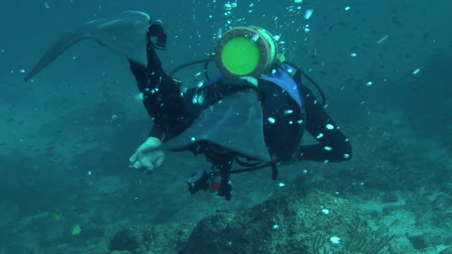 stockvideo's en b-roll-footage met a scuba diver swims along a rocky seabed, - duikfles