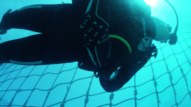 scuba diver swims along shark net, shot from beneath - netting stock videos and b-roll footage