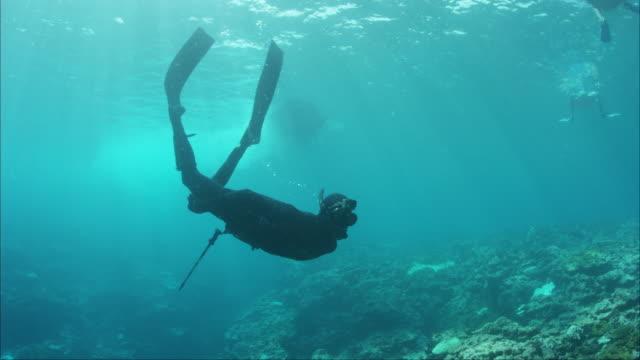 scuba diver swims under paddling surfers - remare video stock e b–roll