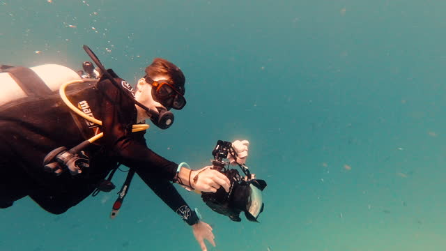 scuba diver underwater filming sea life - medium group of animals stock videos & royalty-free footage