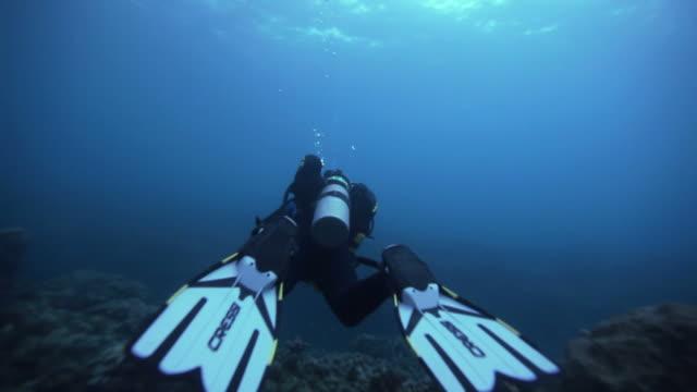 ws scuba diver underwater / grenada, caribbean sea - caribbean sea stock videos & royalty-free footage
