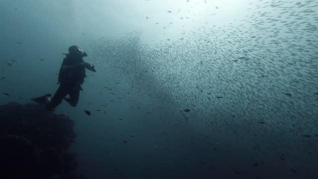 scuba diver underwater watching bait ball school of fish andaman sea - animal behaviour stock videos & royalty-free footage