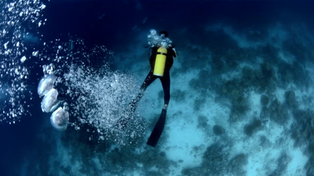 scuba diver - aqualung diving equipment stock videos & royalty-free footage