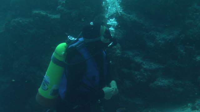 stockvideo's en b-roll-footage met a scuba diver watches fish as sea lions swim past. - duikfles