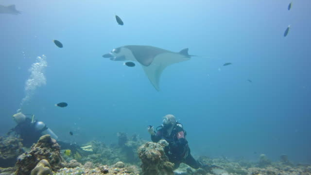 scuba diver watching manta rays flying through the ocean