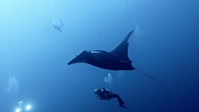 scuba diver with giant oceanic manta ray (mobula birostris) - pelagic zone stock videos & royalty-free footage