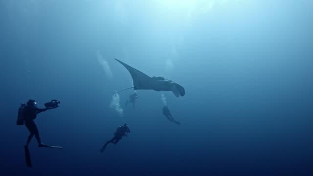 scuba diver with giant oceanic manta ray (mobula birostris) - scuba diving stock videos & royalty-free footage