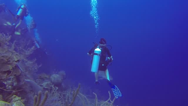 scuba divers are well aware of the risks that they take when they enter the ocean. strapping on tanks of compressed air and descending 100 feet or... - aqualung diving equipment stock videos & royalty-free footage