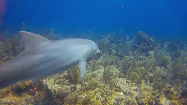 scuba divers everywhere dream of seeing wild dolphins, and many live that dream, seeing one from afar. the lucky few even get a close look at these... - aqualung diving equipment stock videos & royalty-free footage