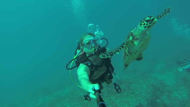 Scuba divers follow turtle through Caribbean waters