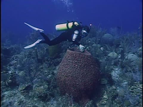 scuba divers in the sea - unknown gender stock videos & royalty-free footage