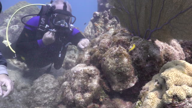 scuba divers inspecting coral at looe key coral reef in the florida keys national marine sanctuary. - music or celebrities or fashion or film industry or film premiere or youth culture or novelty item or vacations stock videos & royalty-free footage