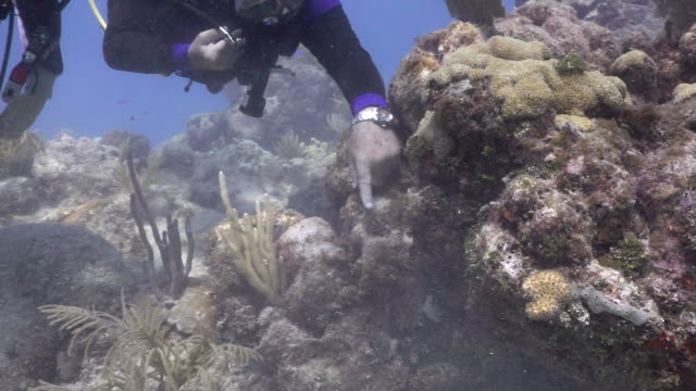 scuba divers inspecting coral at looe key coral reef in the florida keys national marine sanctuary. - reef stock videos & royalty-free footage
