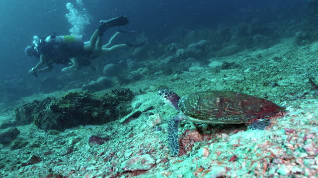 scuba divers observing wild endangered sea turtle - andaman sea stock videos & royalty-free footage