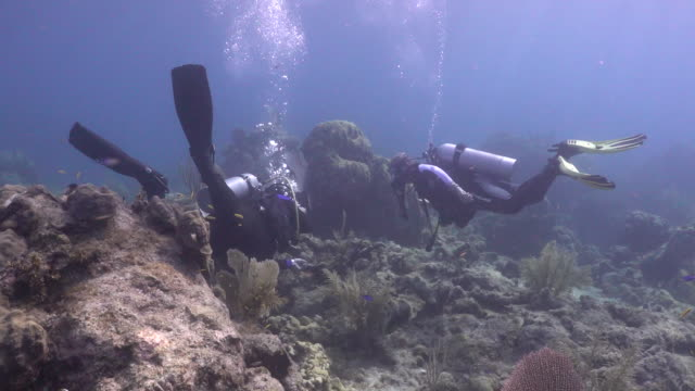scuba divers obstructed by elkhorn coral inspecting coral at looe key coral reef in the florida keys national marine sanctuary. - aqualung diving equipment stock videos & royalty-free footage