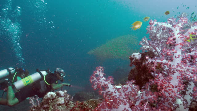 scuba divers on pink coral reef thailand - andaman sea stock videos & royalty-free footage