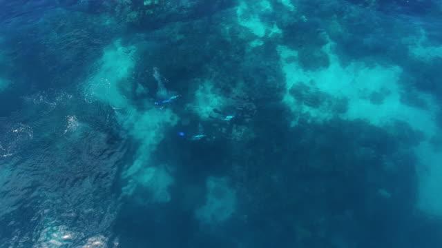 stockvideo's en b-roll-footage met 3 scuba divers shot by a drone - scubaduiken