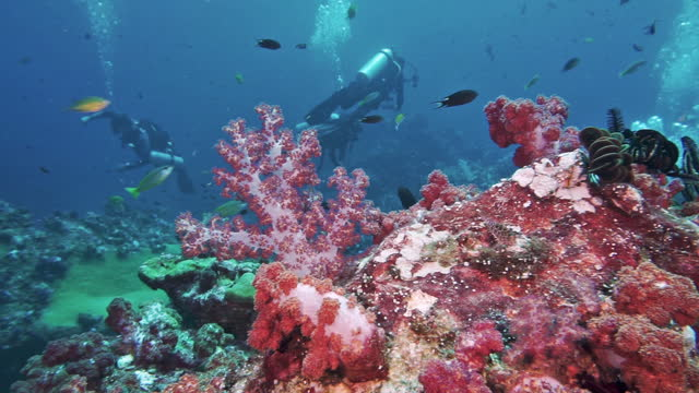 scuba divers surrounded by vibrant soft corals andaman sea thailand - eco tourism stock videos & royalty-free footage